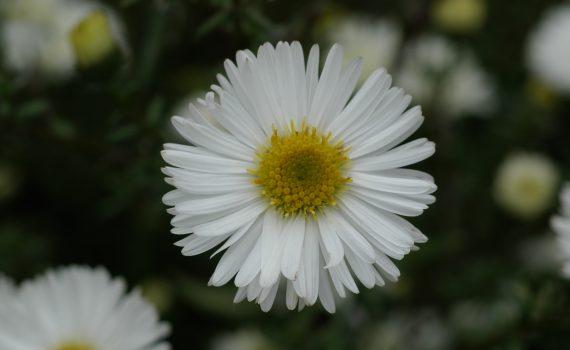blandie-1