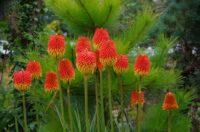 Late Season Herbaceous